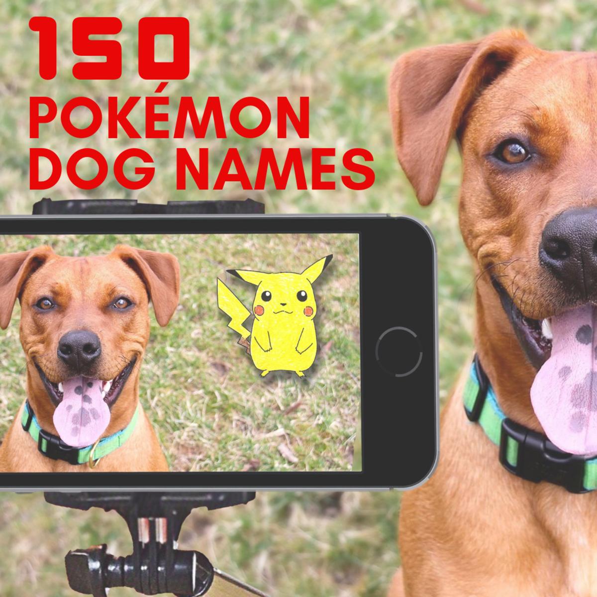 Pokémon names for your pet!