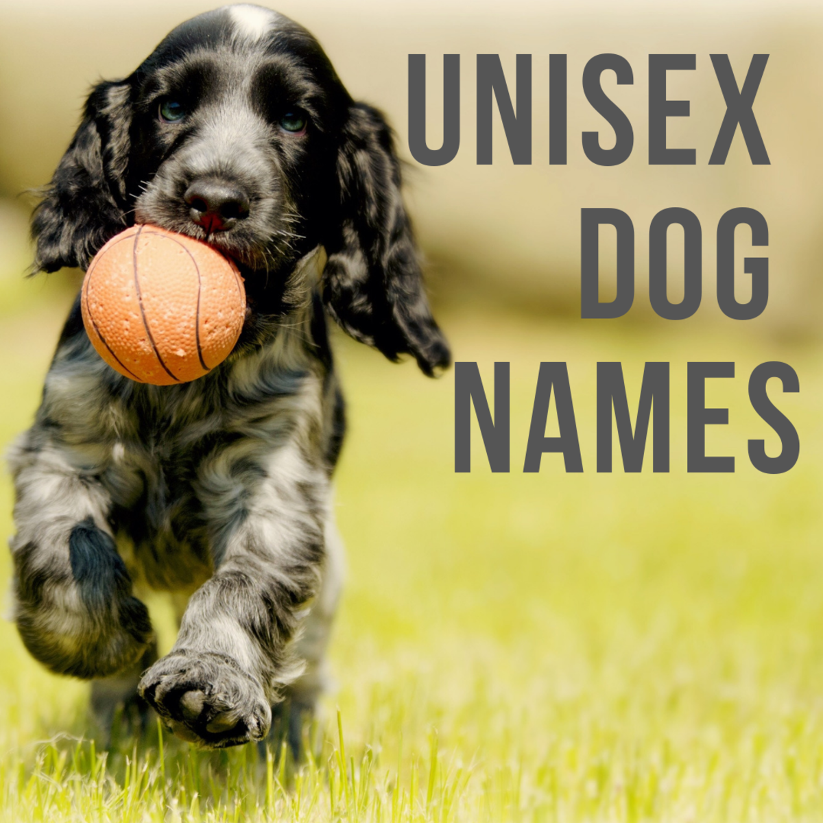 Gender-Neutral Dog Names