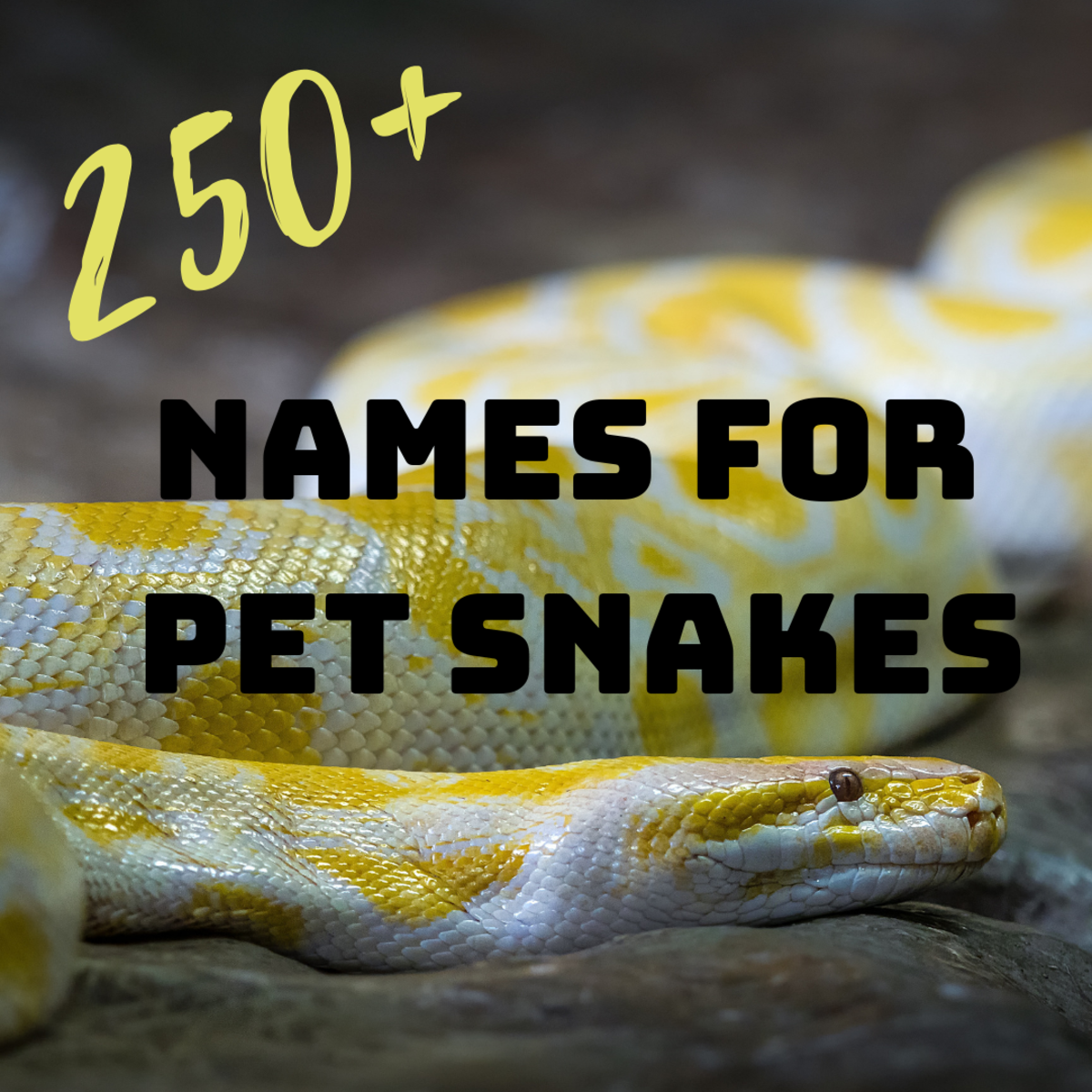 250+ Best Funny, Ironic, and Unique Pet Snake Names