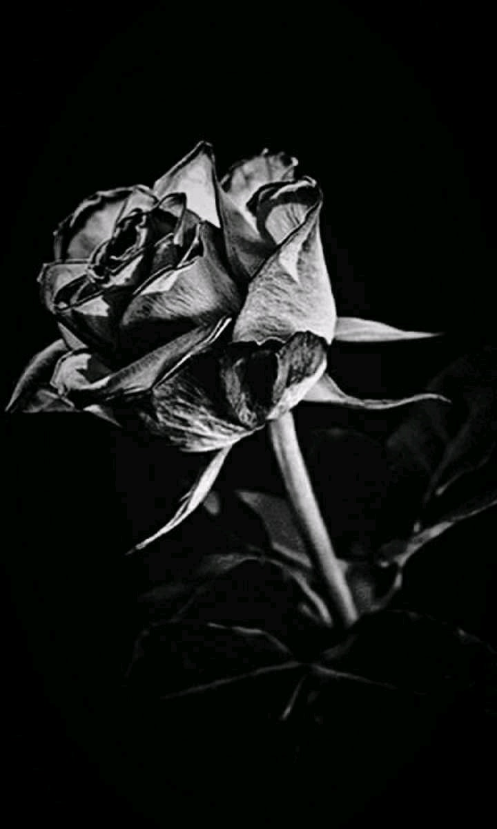A Bouquet of Black Roses