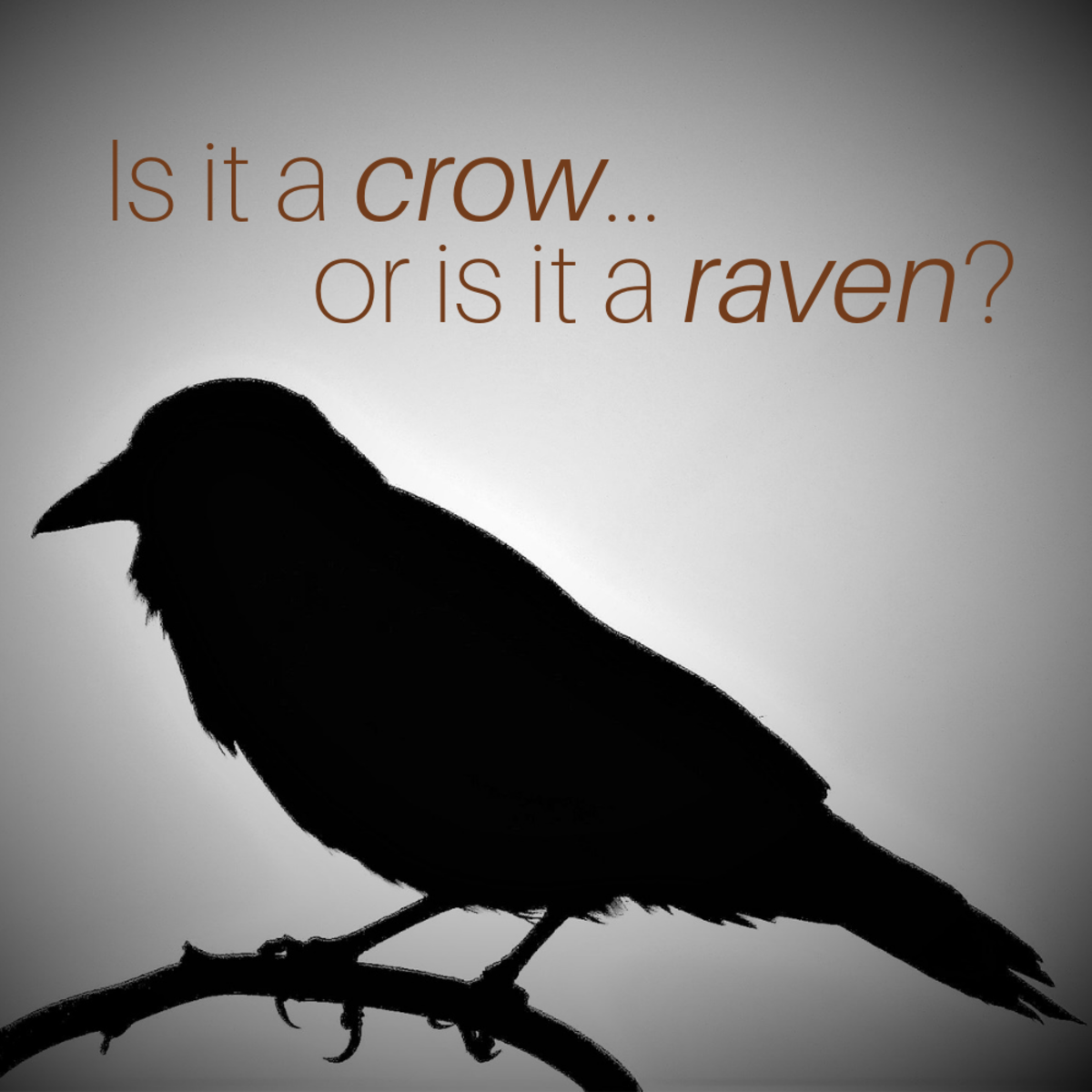 Ravens vs. Crows: They Are Not the Same