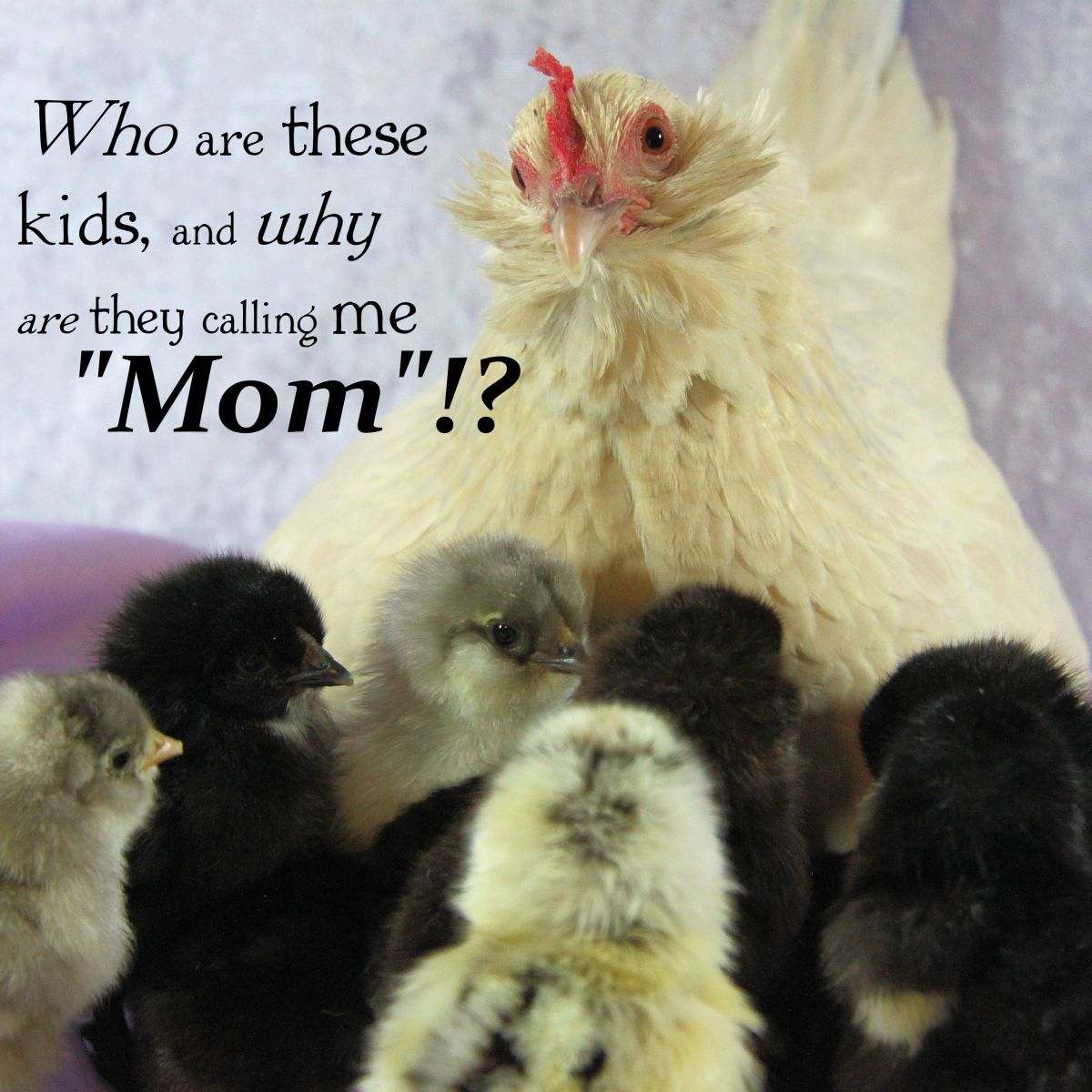 An Expert's Guide to Raising Healthy Chicks (and Surviving Chick Days)