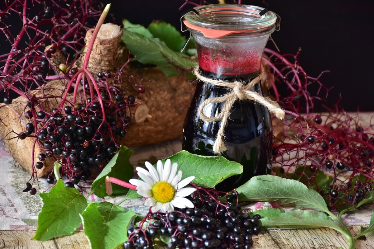 Why Elderberries Are Excellent for Your Health
