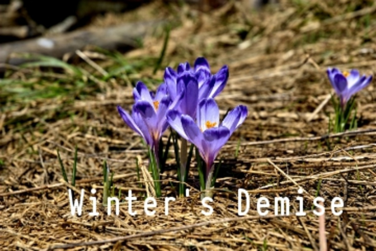 Poem:  Spring is almost Here The First Demise of Winter