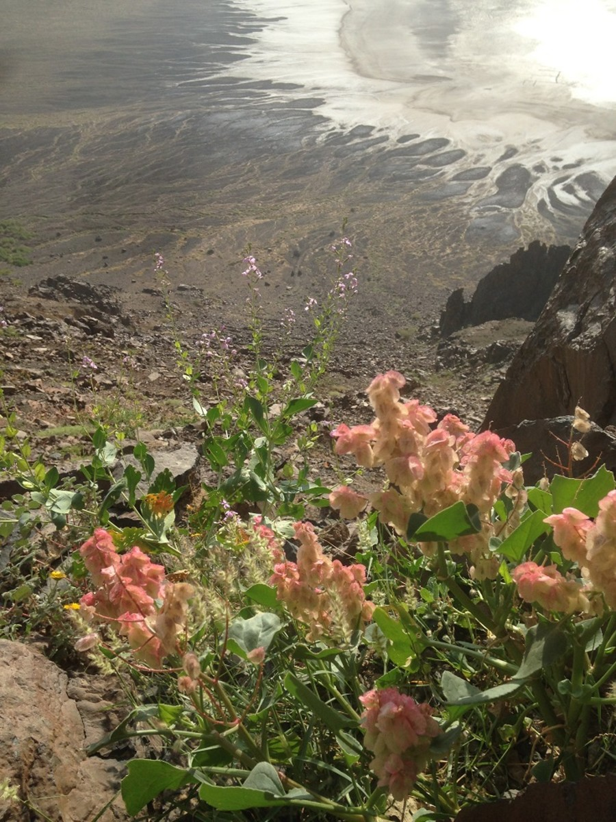 A beautifull natural garden at the Al-Wahba crater with the salt residue at the background. Gardens such as this is not uncommon in the Arabian desert during spring.