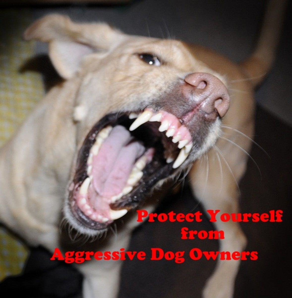 How to Protect Yourself From Aggressive Dogs and Their Owners