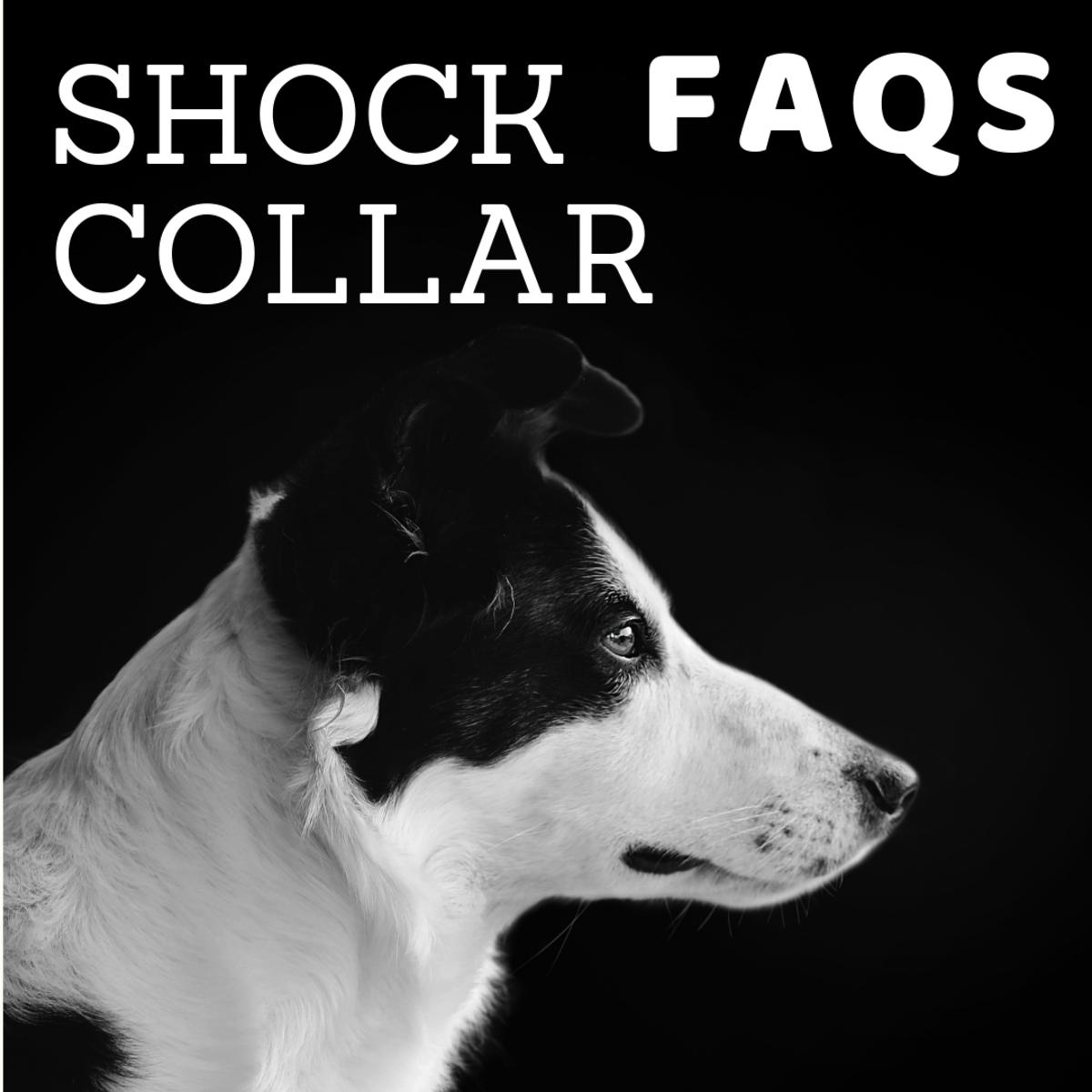 Are Dog Shock Collars Harmful? E-Collar Training Dangers