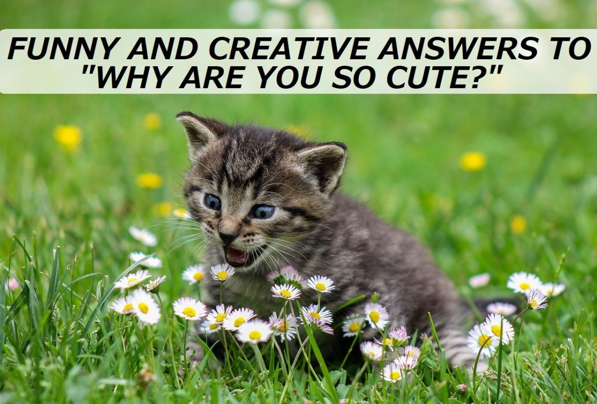 "100+ Funny and Creative Answers to ""Why Are You so Cute?"""