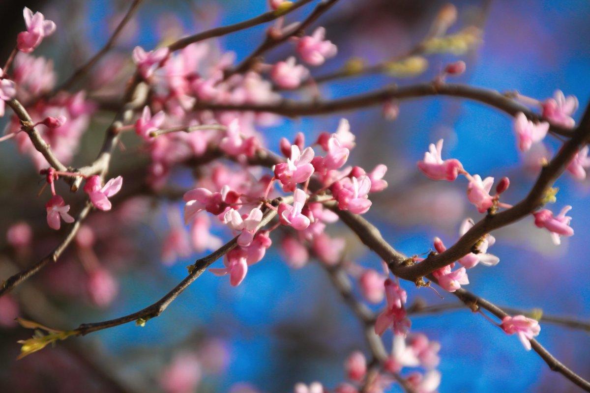 seasonal Poetry: When Spring Finally Arrives Here: A Poem