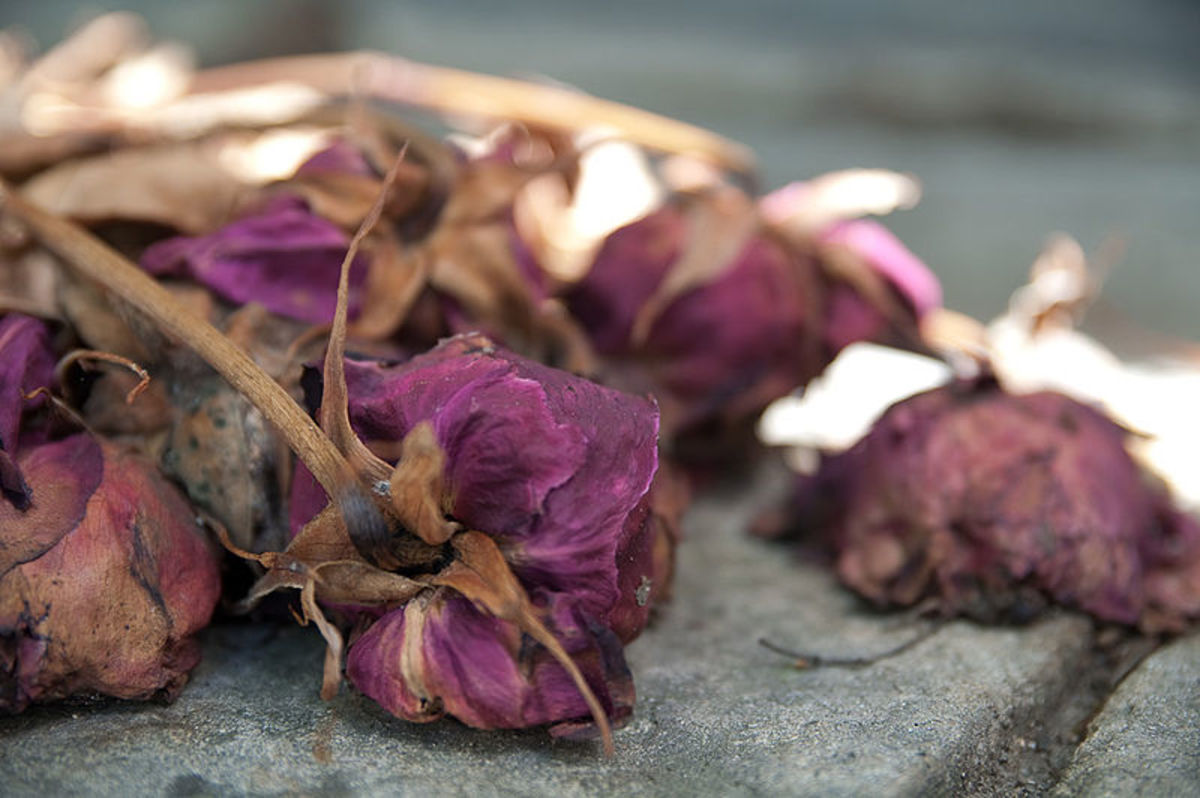 A dead bunch of roses lies outside a family tomb. (16 July 2010, 14:34)