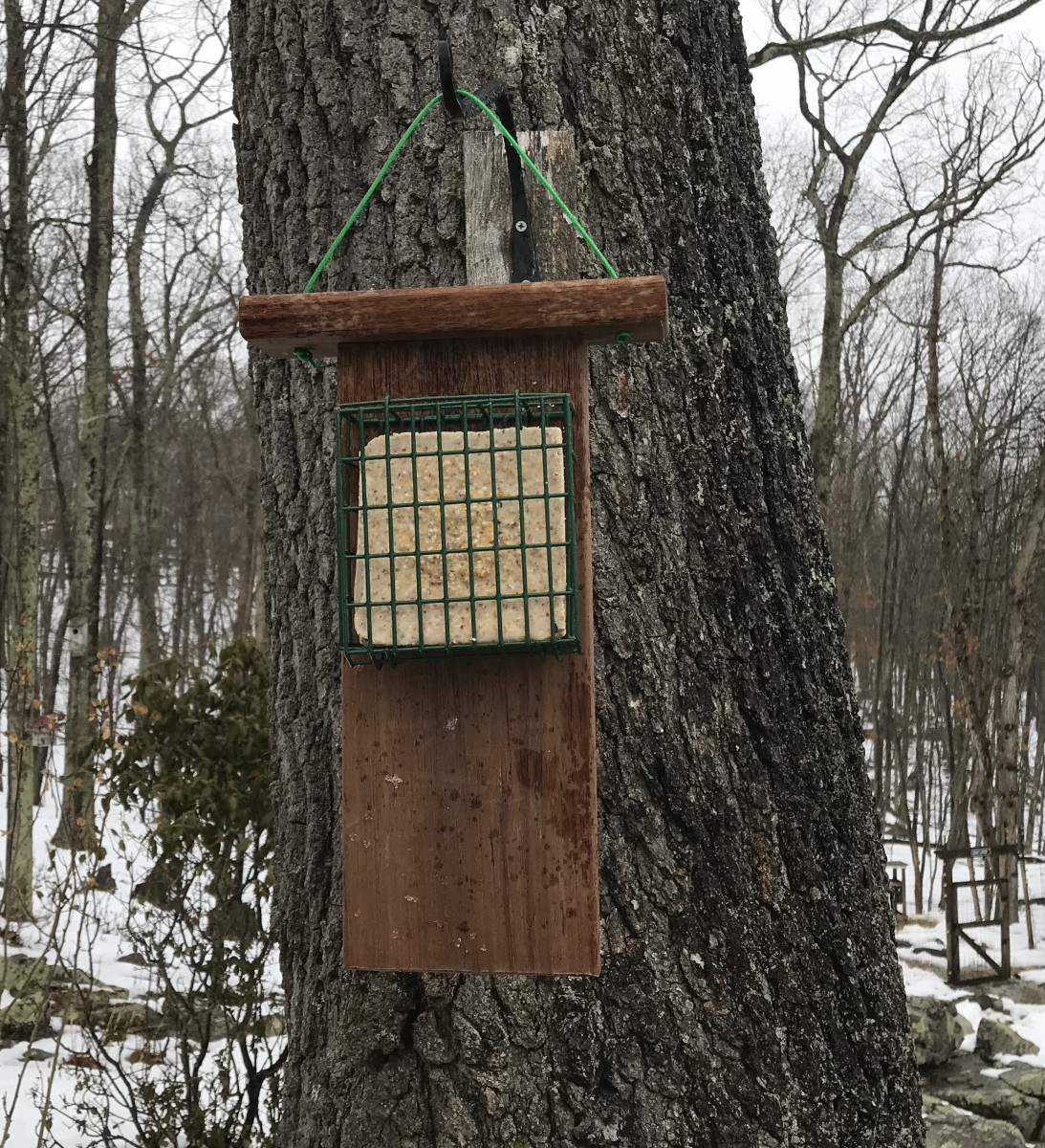The finished suet feeder hangs in our yard. The extended tail prop makes it easy for woodpeckers to balance while feasting on suet cakes.