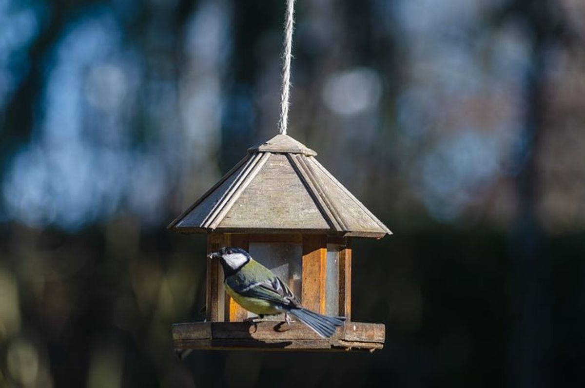 A bird enjoying the seeds at the feeder
