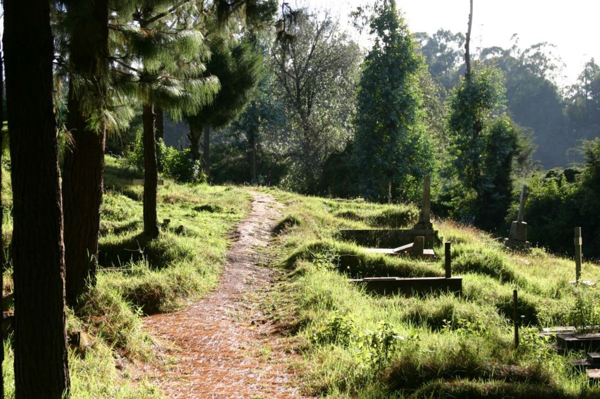 6 Popular Places to Visit in Ooty: Have You Seen Them All?