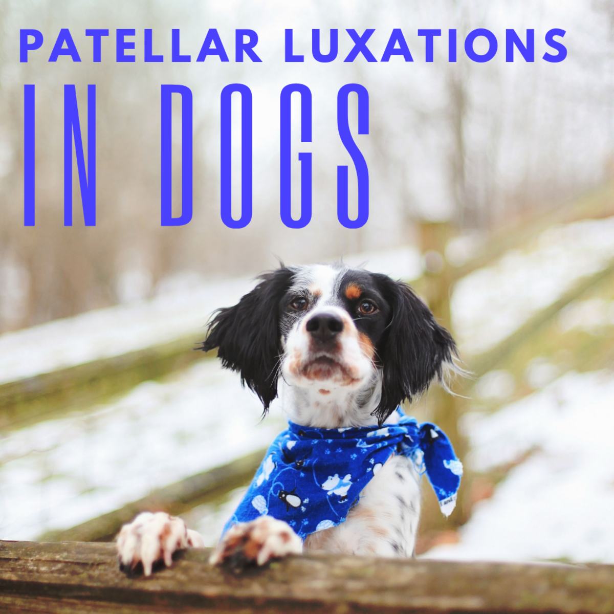 How do deal with patellar luxations in dogs.