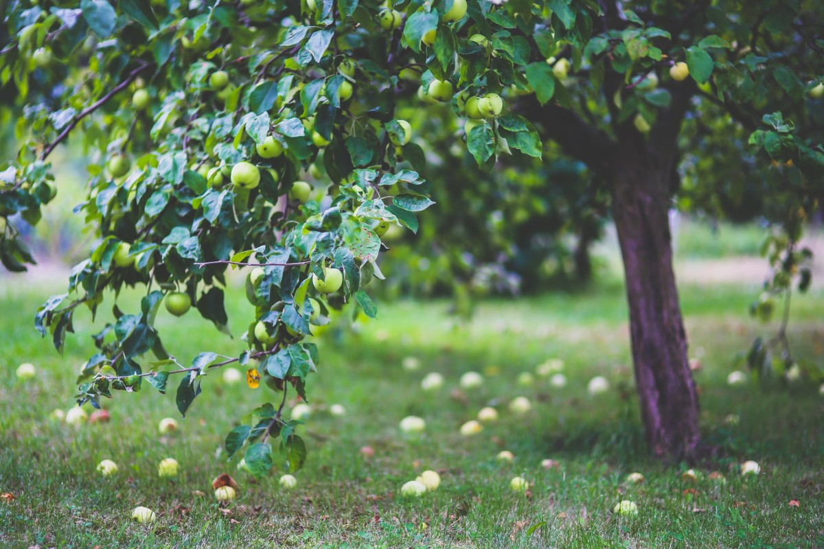 Bought Experience is The Best Kind: How This Applies to Green Apples