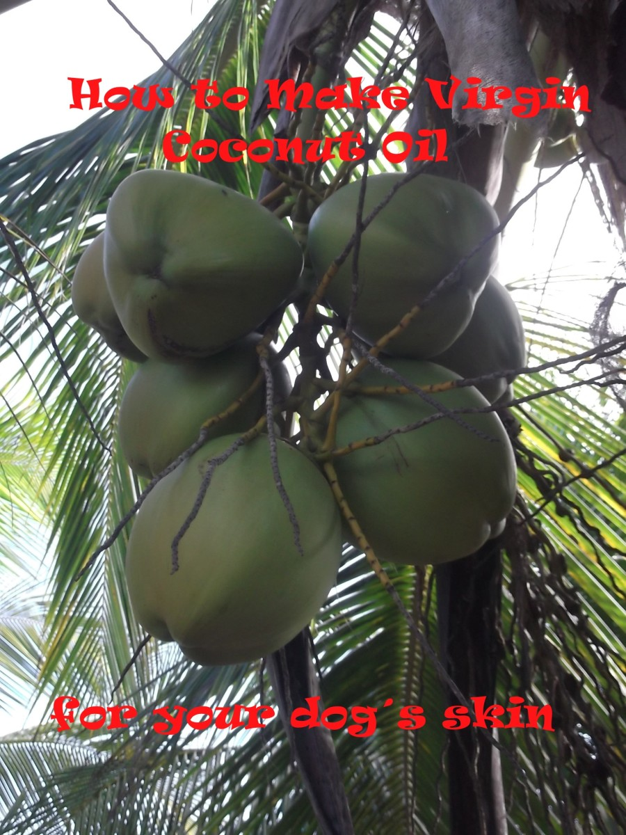 How to Make Virgin Coconut Oil for Your Dog