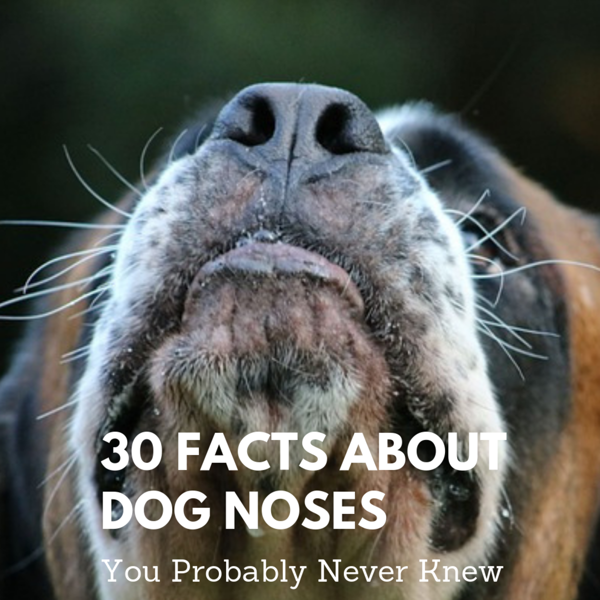 30 Facts About Dog Noses You Probably Didn't Know Until Now