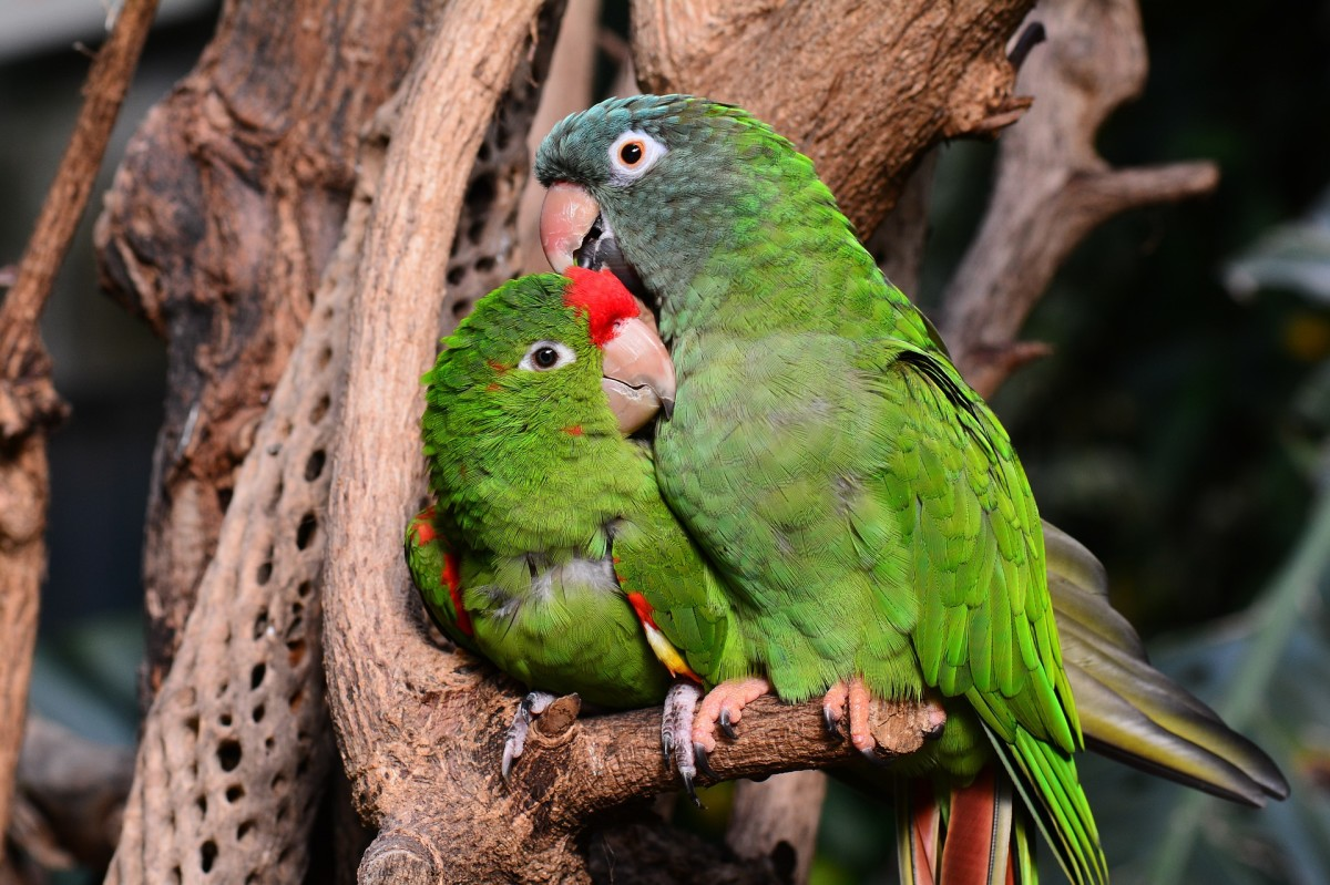 100 Best Names for Lovebirds