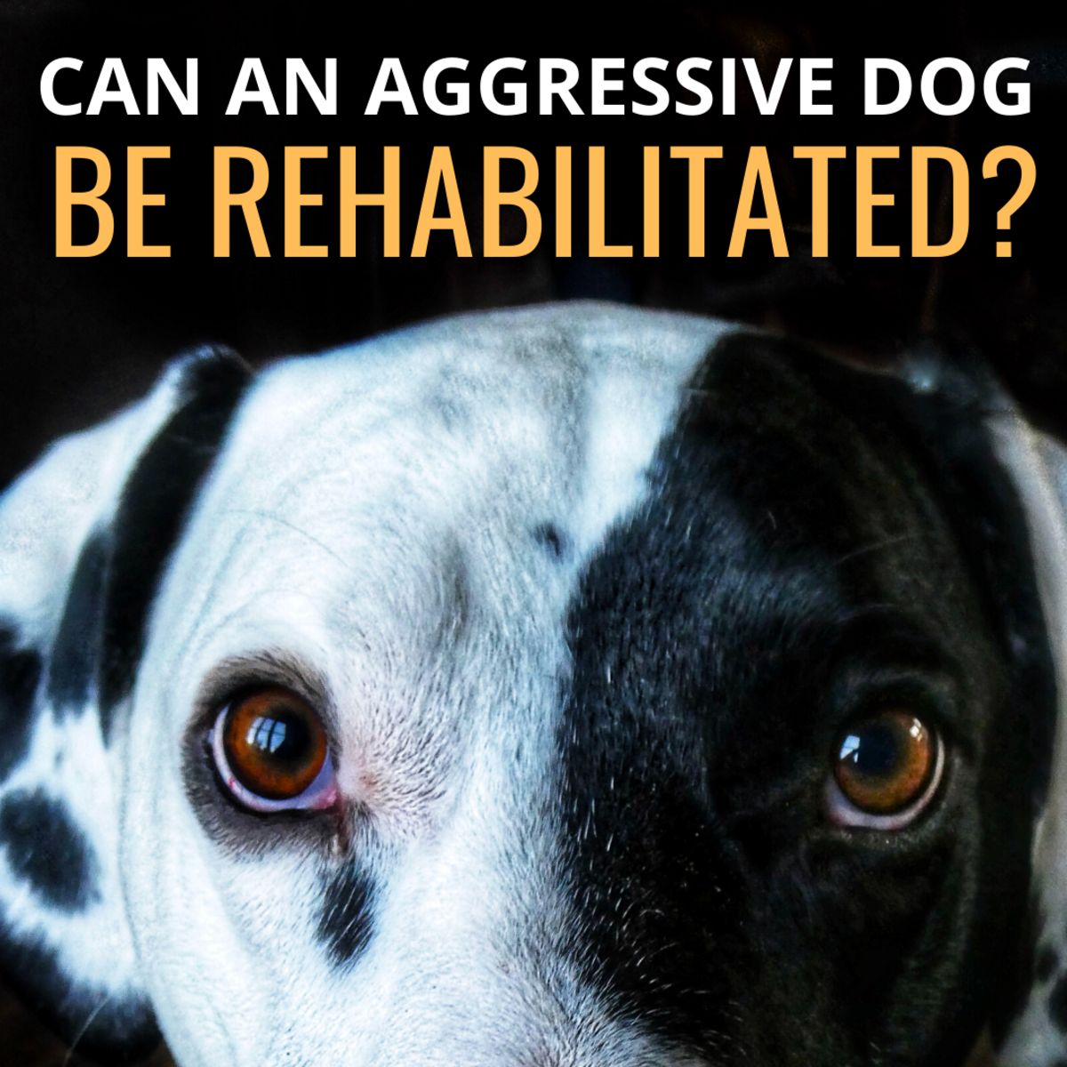 Can an Aggressive Dog Be Successfully Rehabilitated?