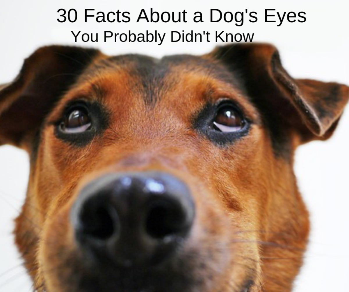 30 Surprising Facts About a Dog's Eyes
