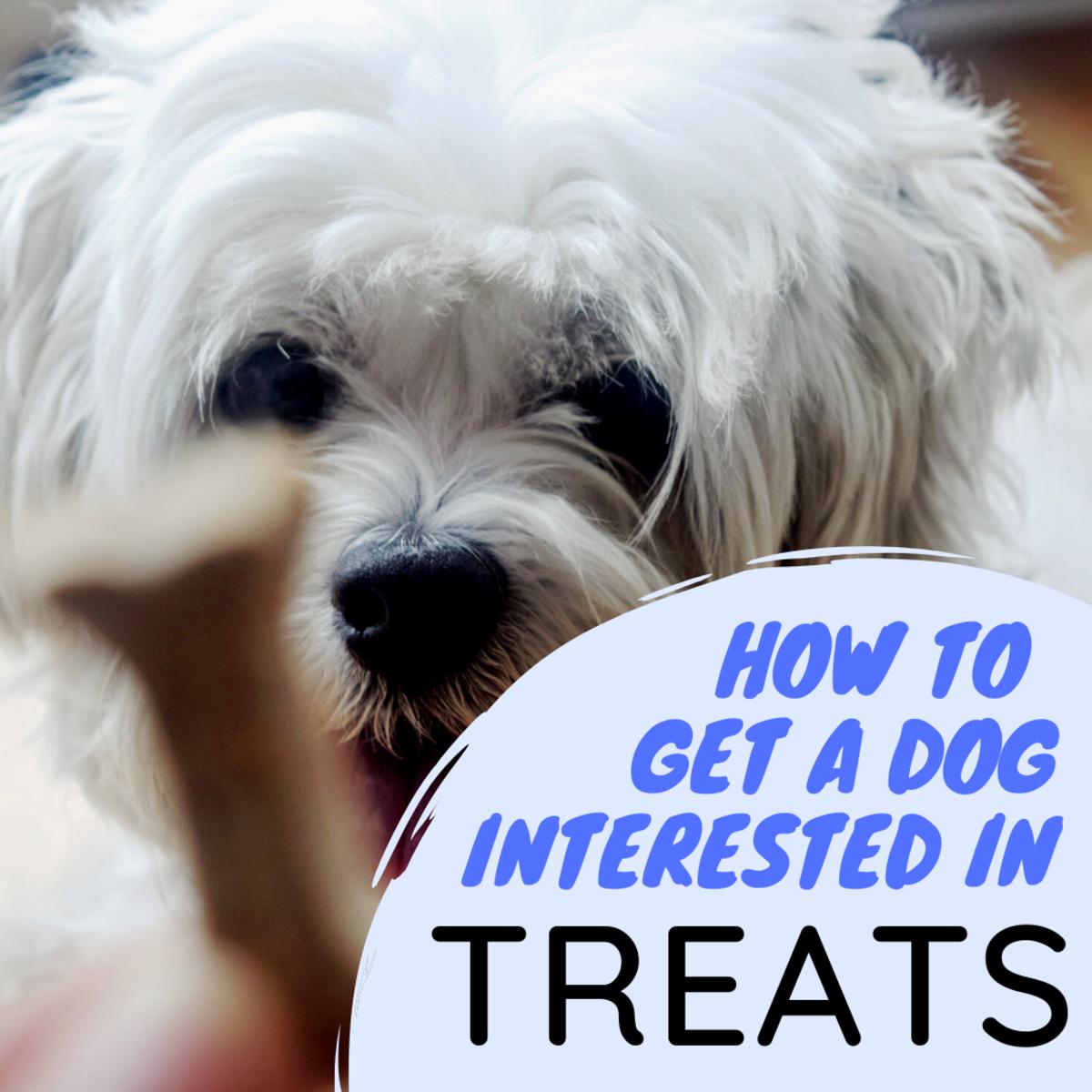 Why Won't My Dog Respond to Treats?