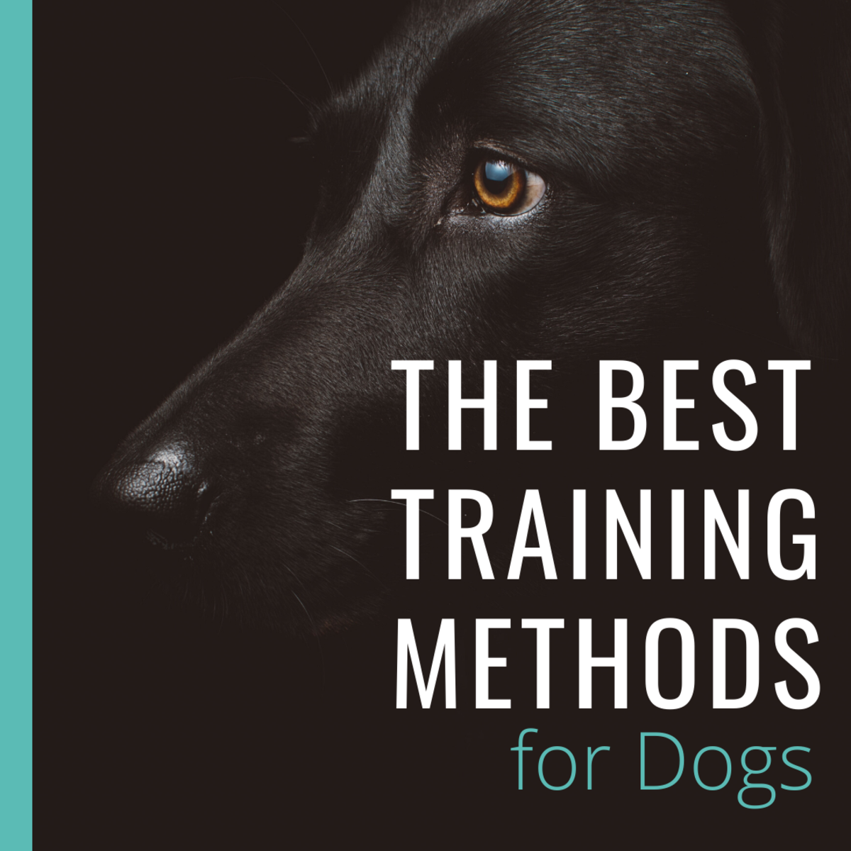 What Is the Best Training Method for Dogs?