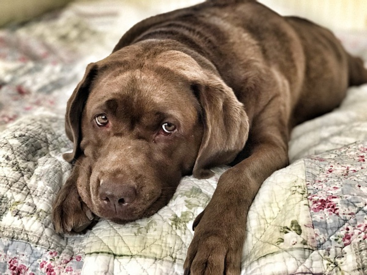 Why Does My Dog Pee on My Bed?