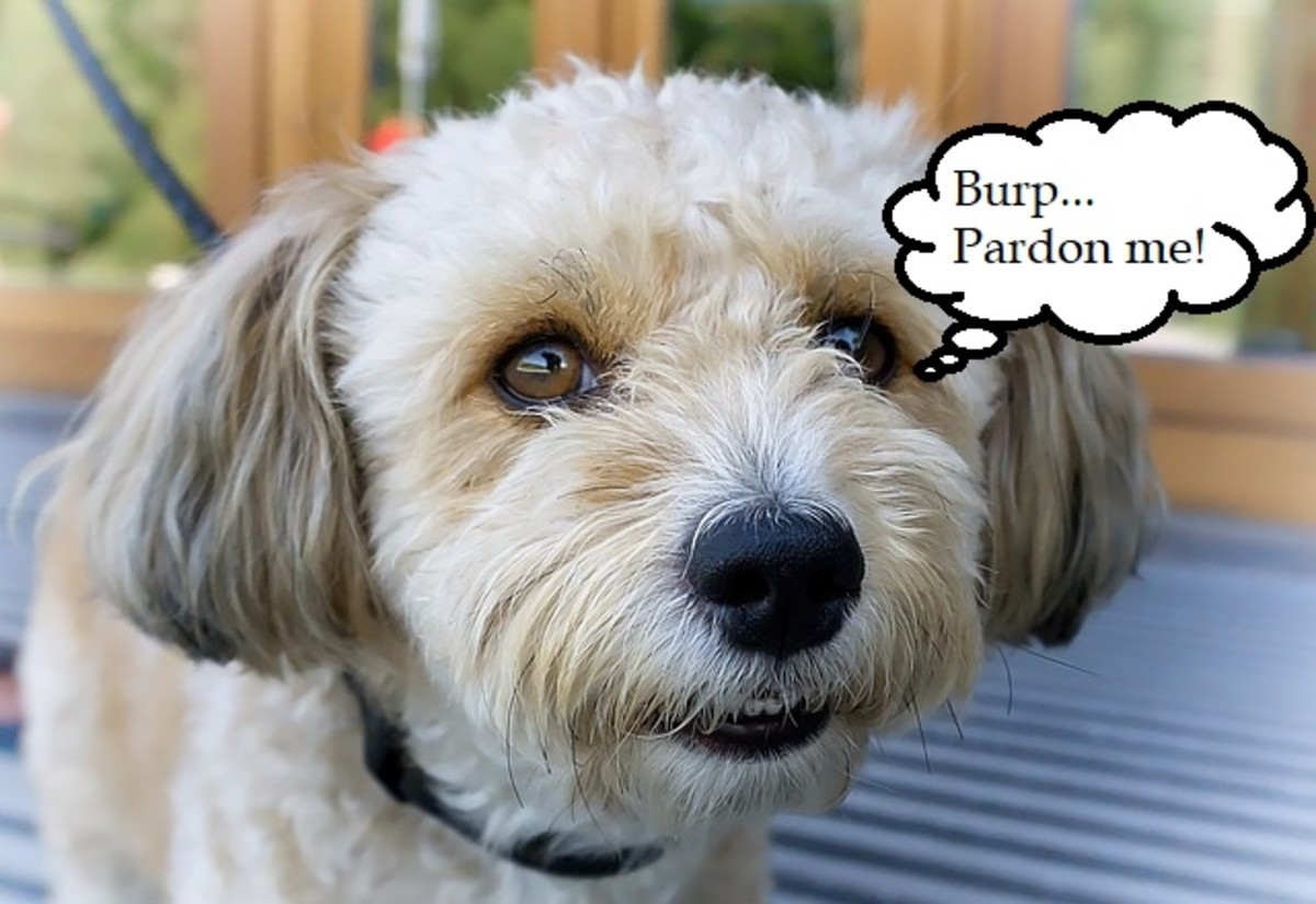 Why do dogs burp?