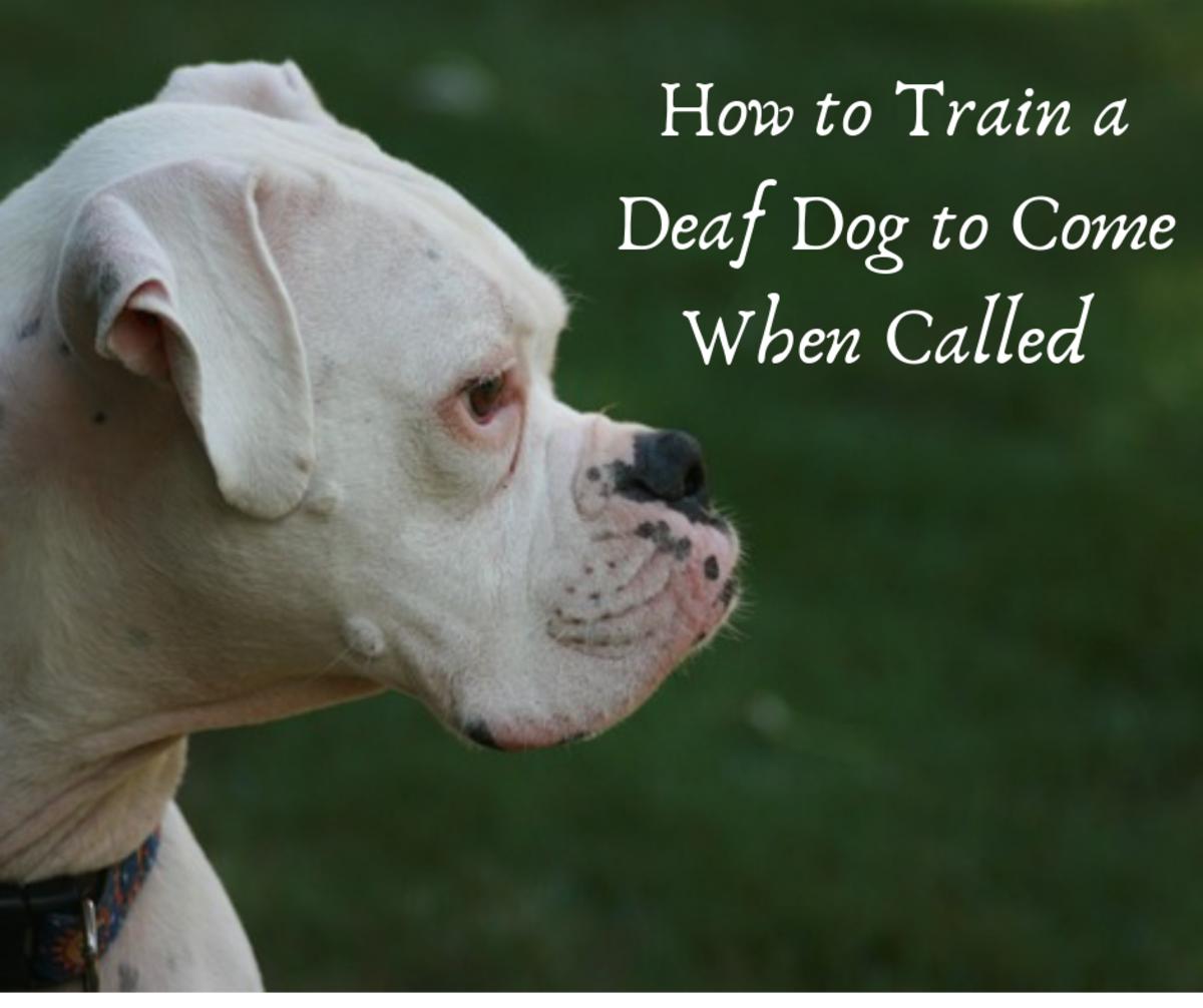 How to Train a Deaf Dog Recall