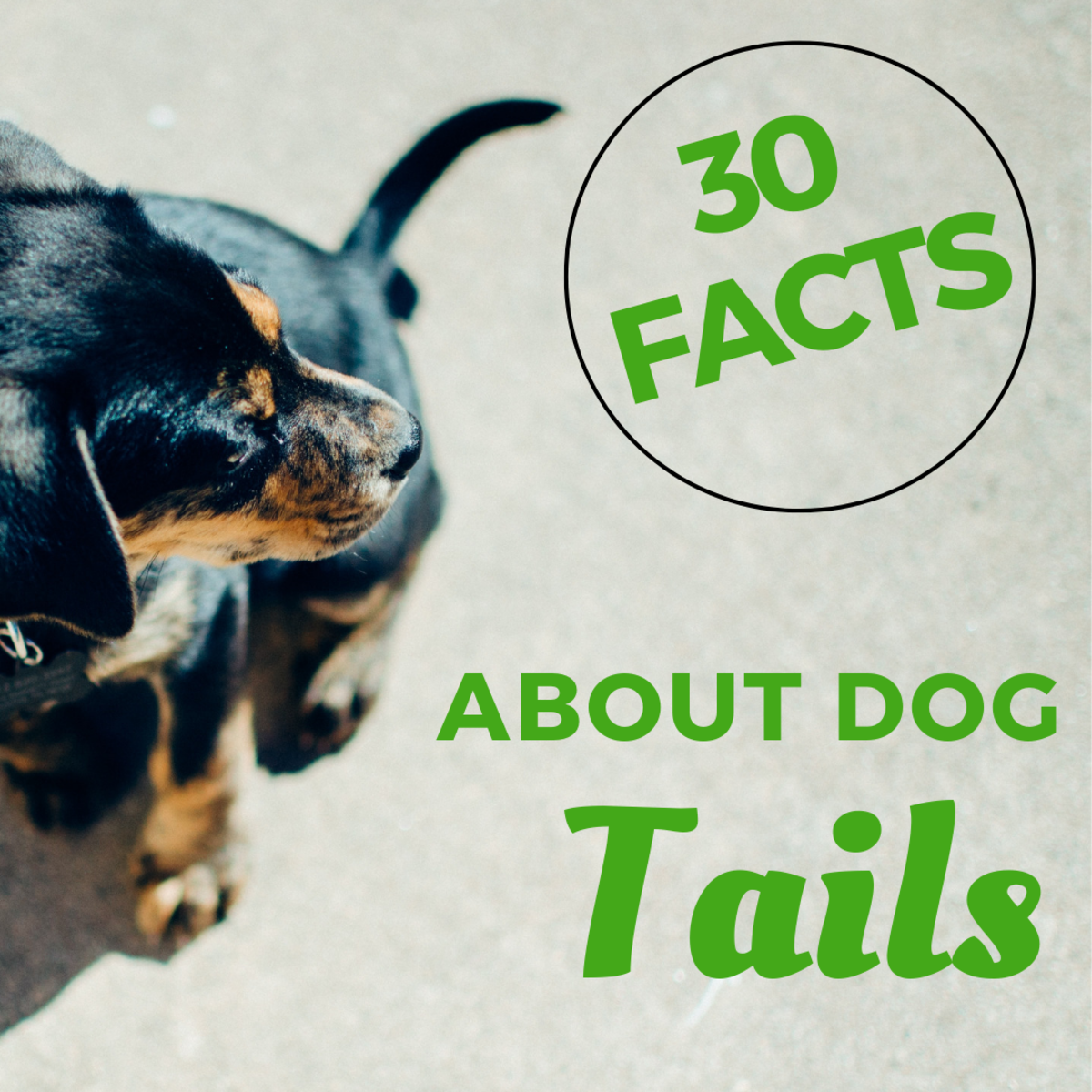 30 Fascinating Facts About Dog Tails