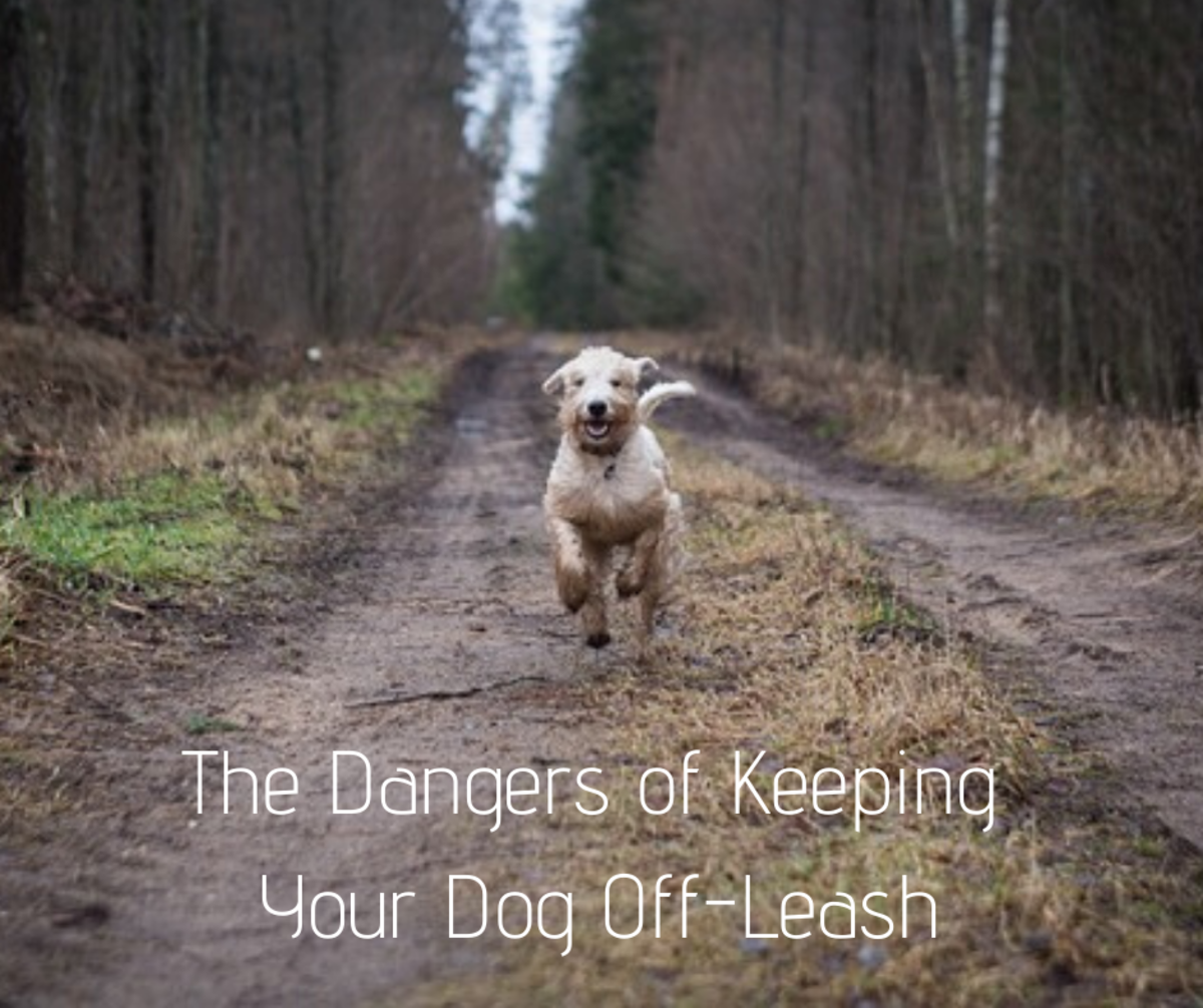 10 Dangers of Letting a Dog Go Off-Leash