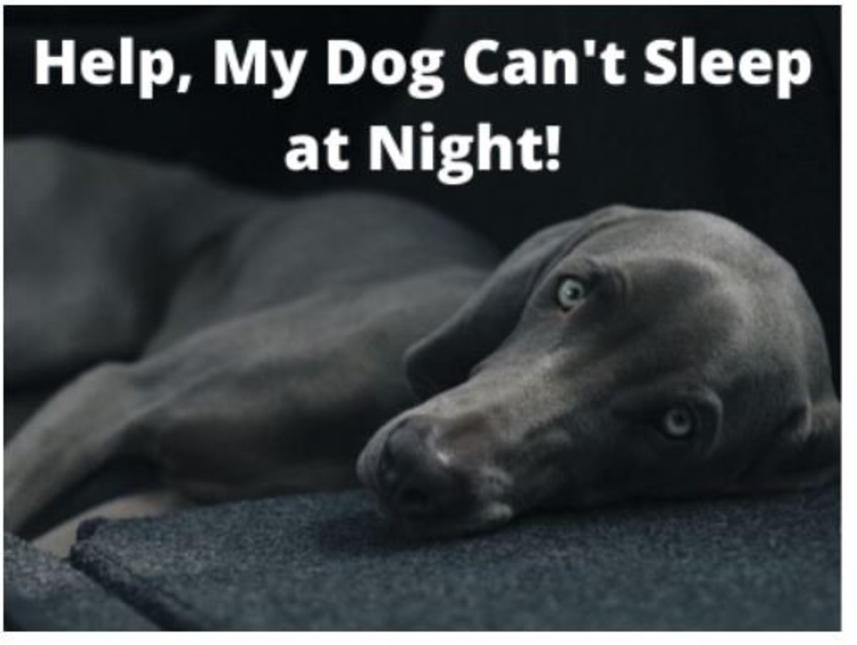 Help, My Dog Won't Sleep at Night: 12 Tips for a Restful Night