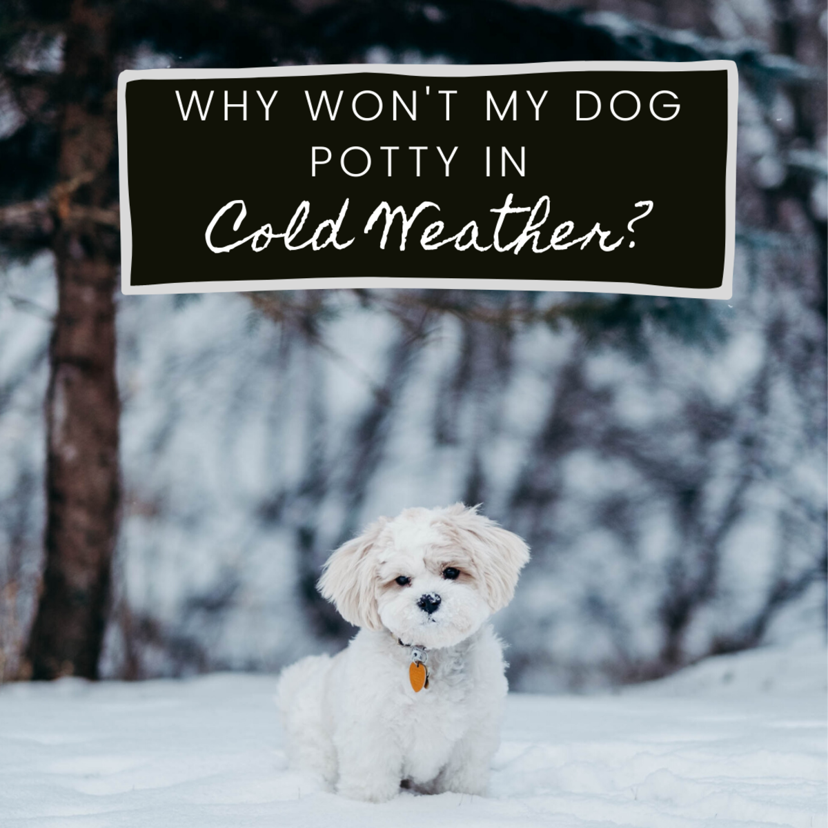 Help! My Dog Won't Potty When It's Cold Outside