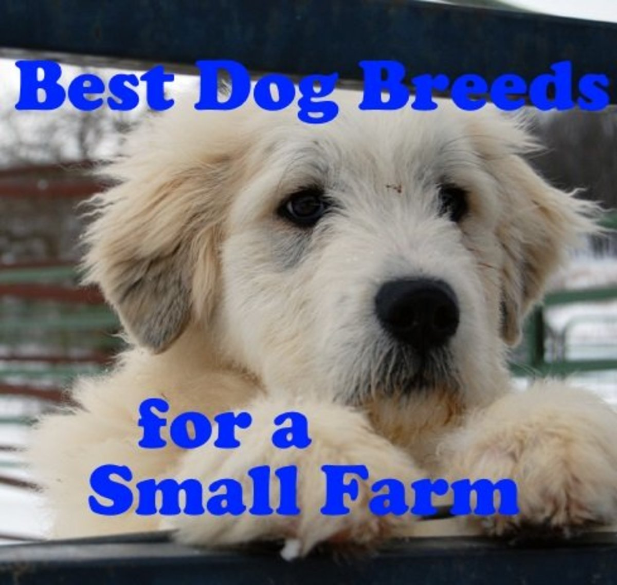 Six Best Dog Breeds for a Small Backyard Farm
