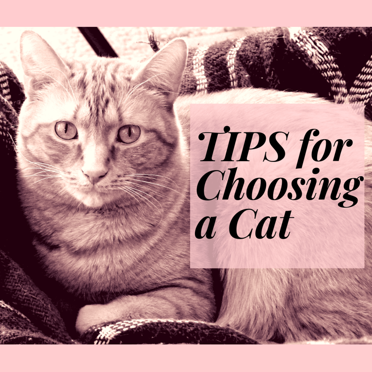 Learn some tips for choosing a cat