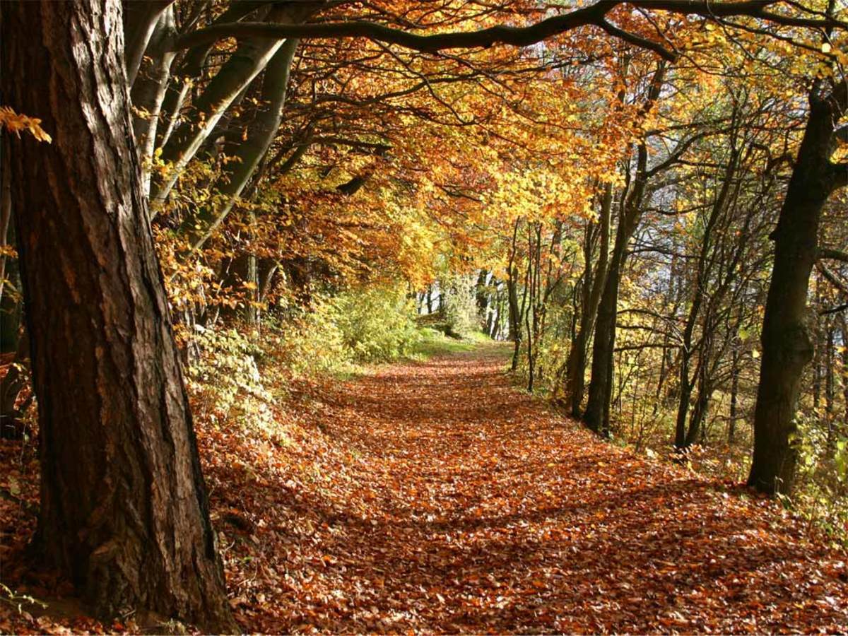 12 Pieces of Classical Music Inspired by Autumn