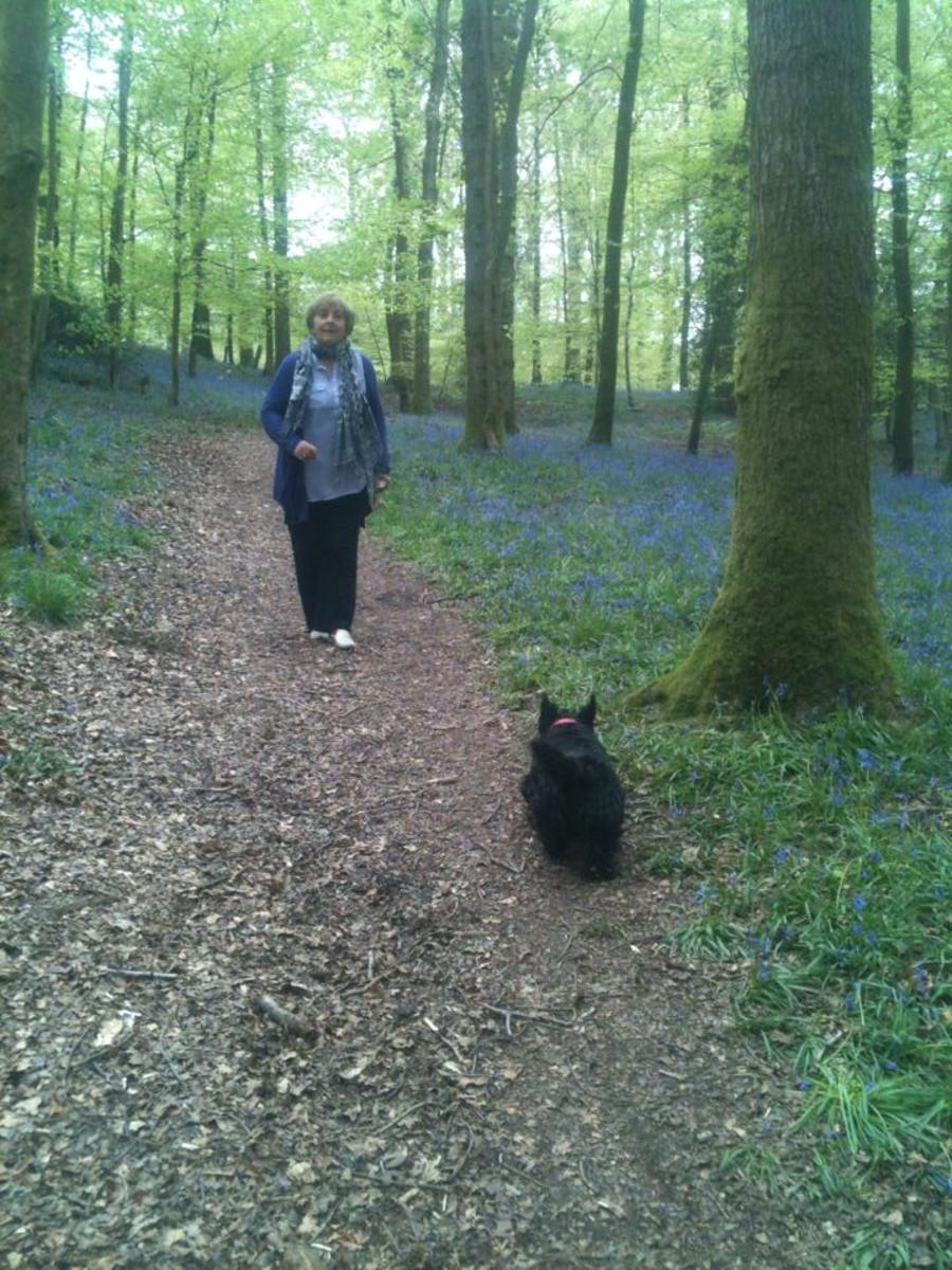 Adventure in the Forest of Dean