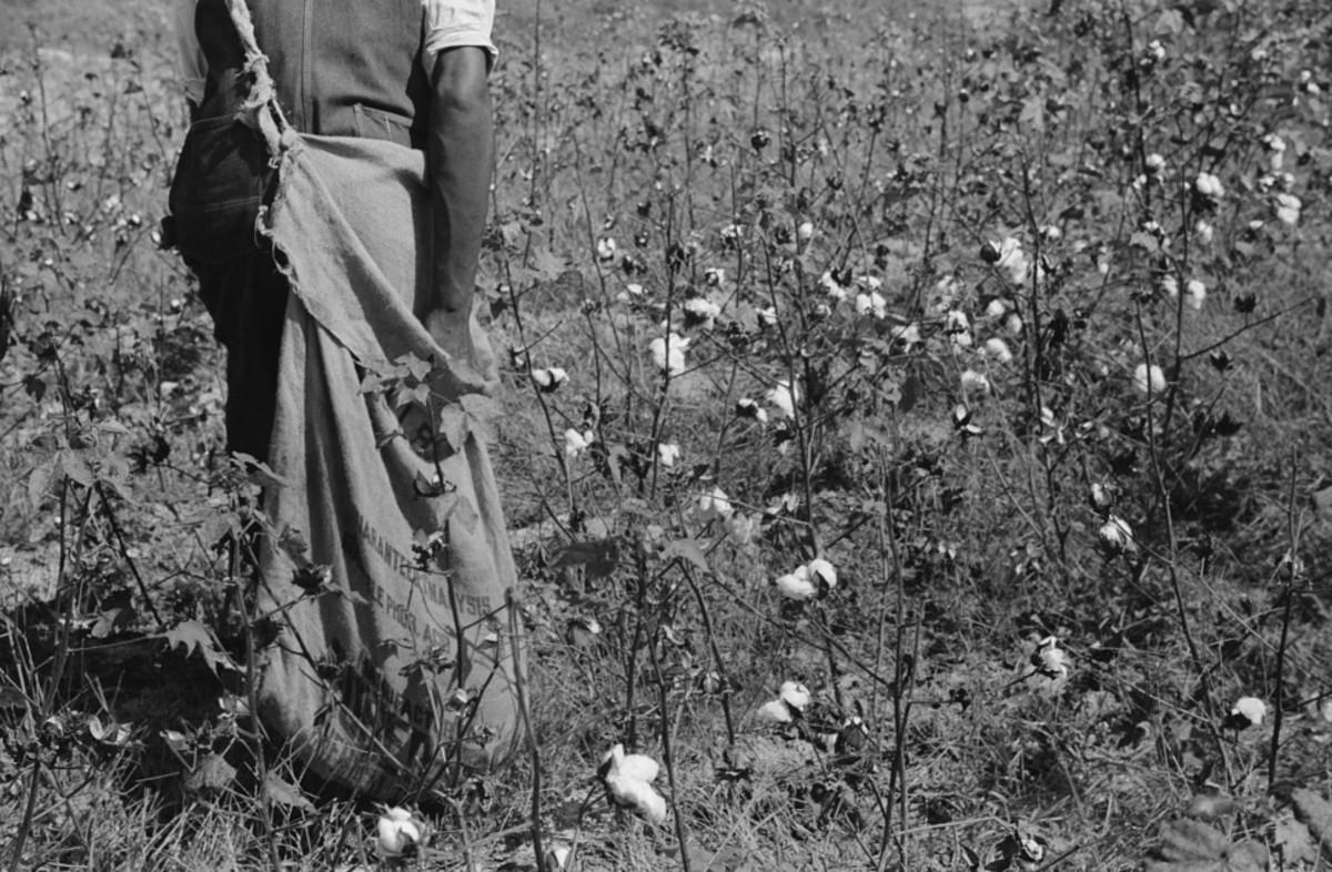 The Elaine Arkansas Massacre