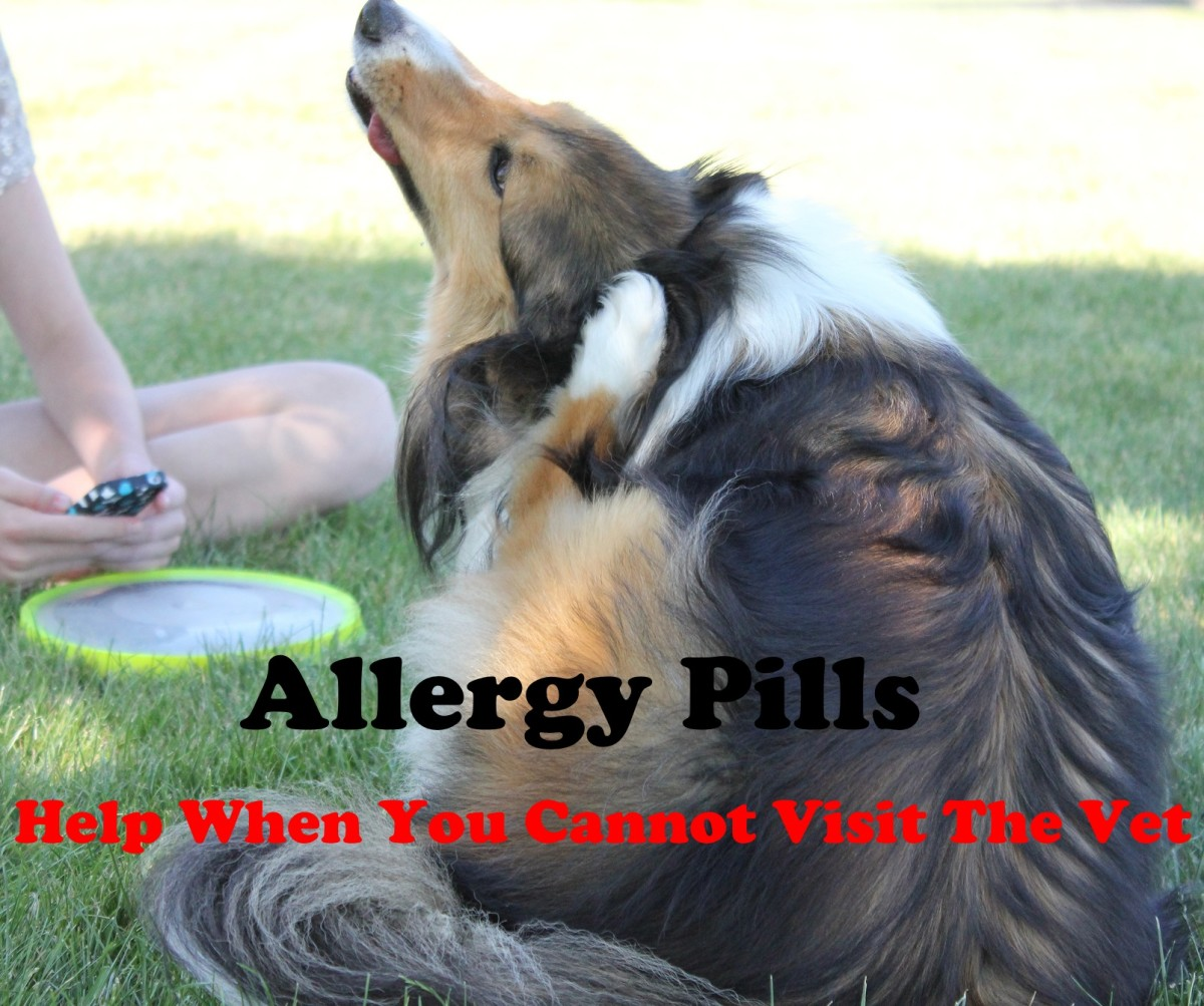 Allergy pills can help your dog when you are not able to visit the veterinarian.