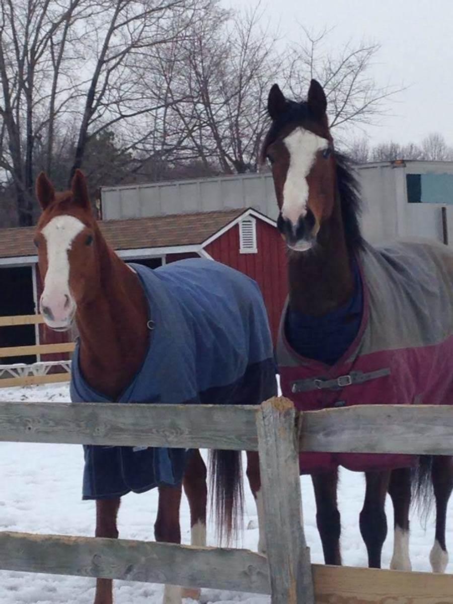 Two big goofy geldings!