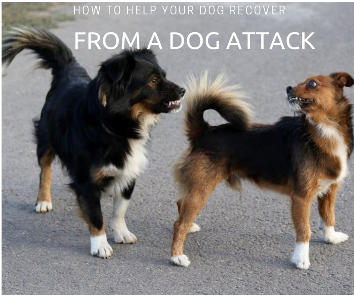 How to Help a Dog Recover From a Dog Attack