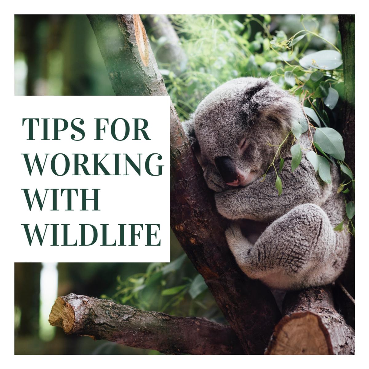 How to Work With Wildlife: Wildlife Rehabilitator Careers
