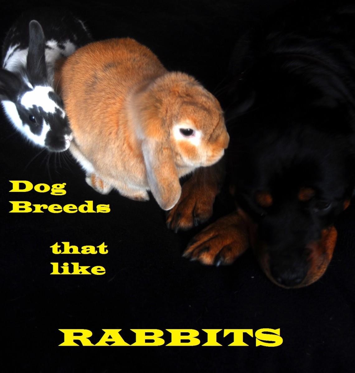 Best Way Train Rabbit Dogs