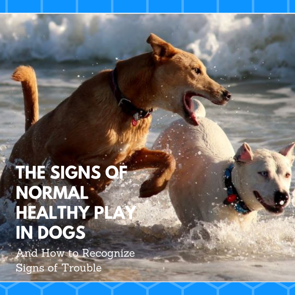 Good dog play involves dogs who are having fun and look forward to the interaction. Learn how dogs use signals to emphasize their intent to do no harm.
