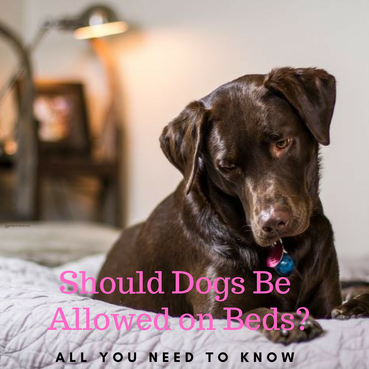 Should Dogs Be Allowed on the Bed? All You Need to Know