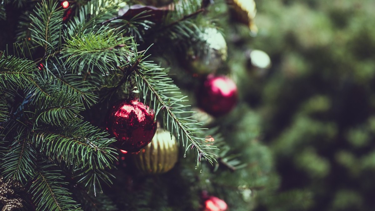 The Best Trees for Christmas Trees