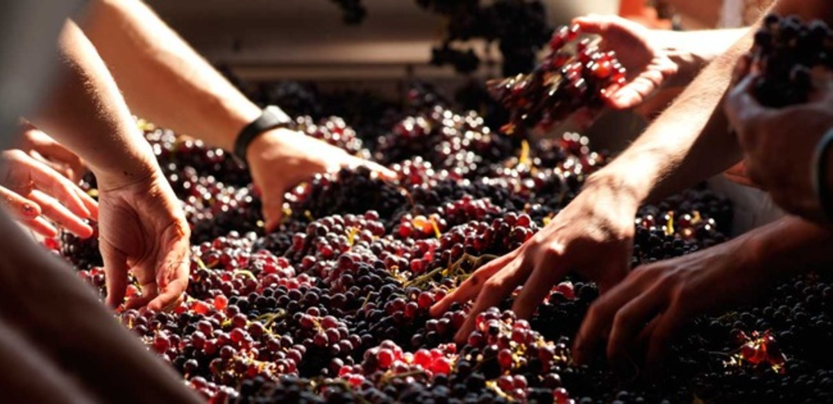 The Environmental, Social and Economic Impacts of Winemaking