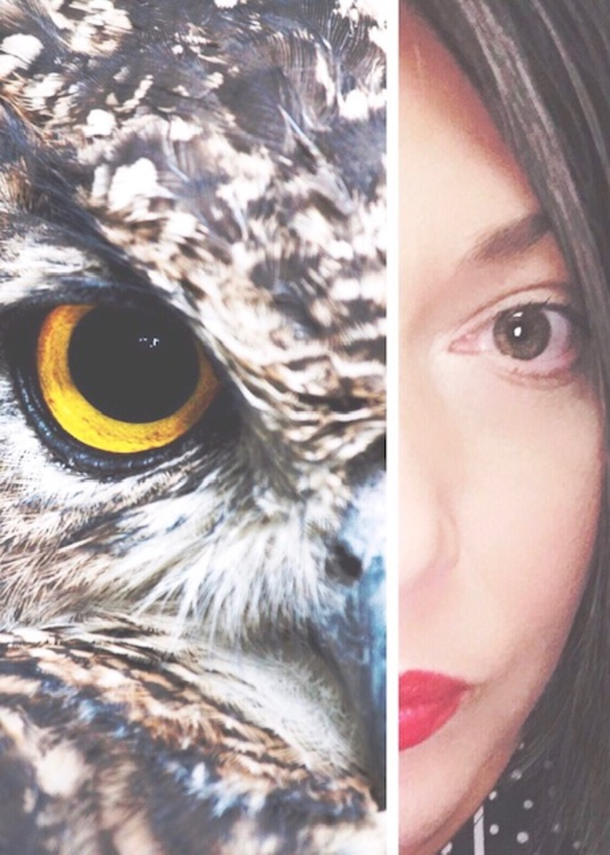The Phase of Fade: The Careless Fox and The Wisdom of the Owls