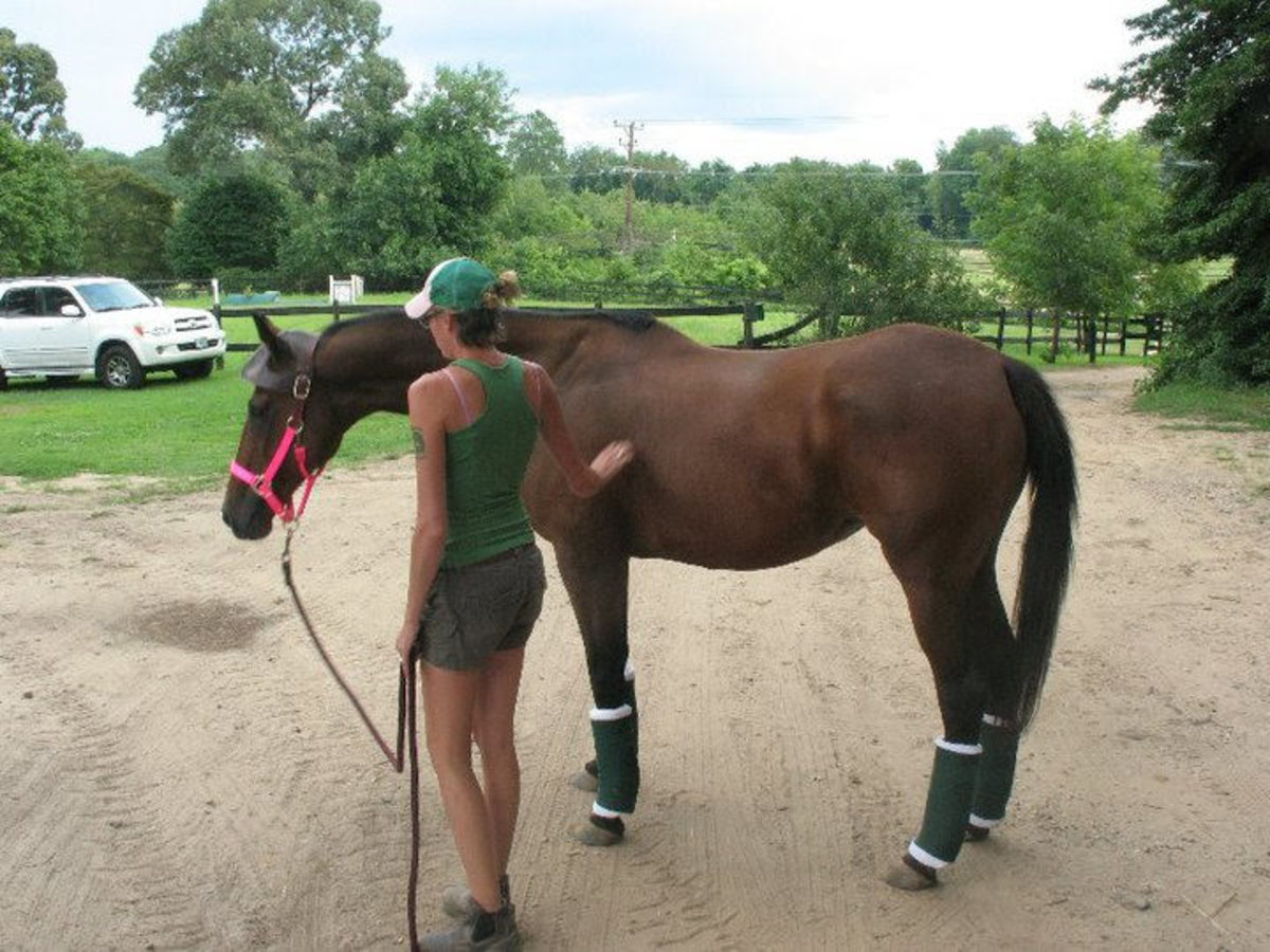 Congrats on your new horse! Now here are some important questions to ask!