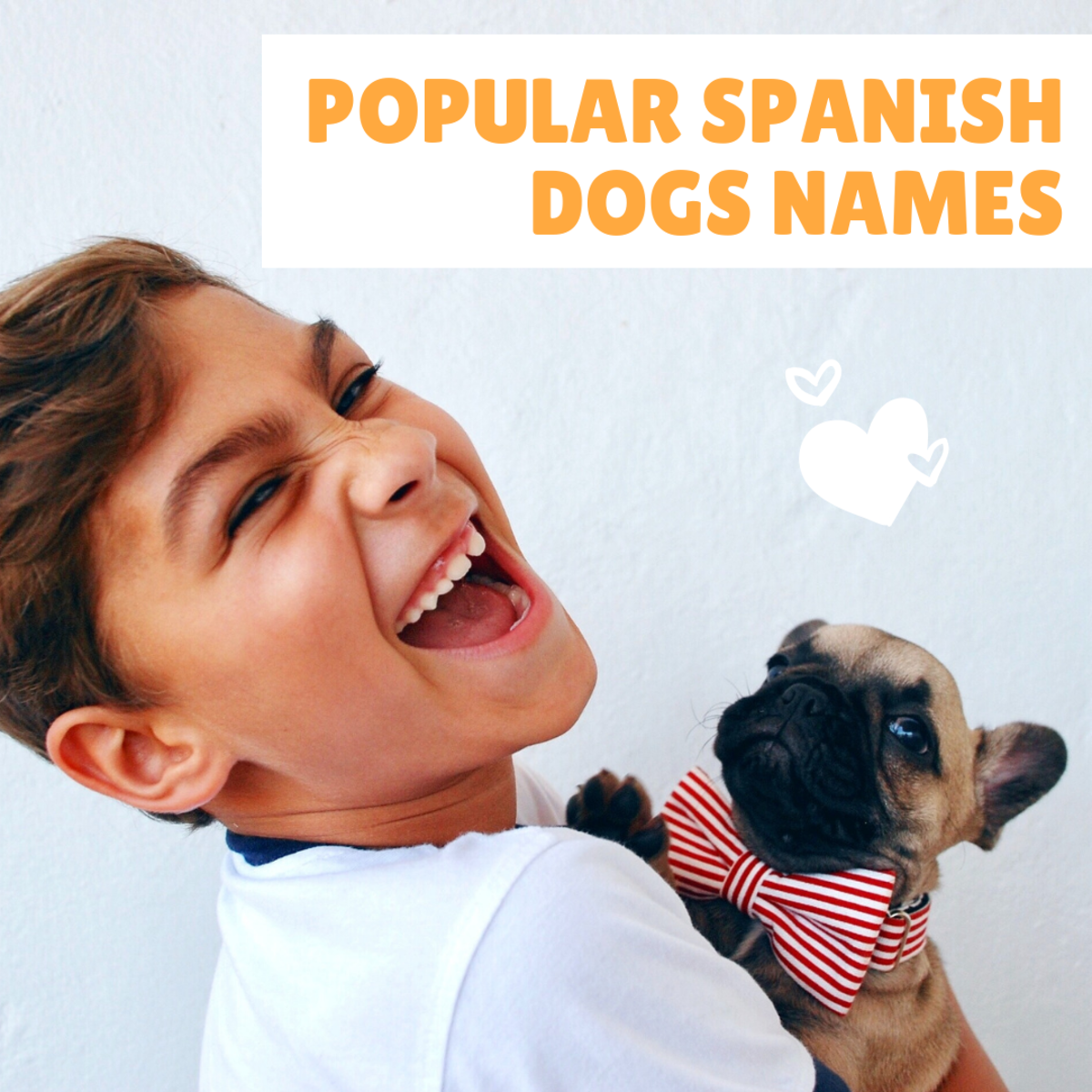 The most popular Spanish dog names.